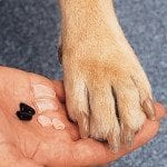 hair-of-the-dog-santa-rosa-soft-paws
