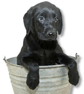 Pet grooming santa rosa hair of the dog planning on bathing a dog santa rosa dog bath fun is just part of our business solutioingenieria Image collections