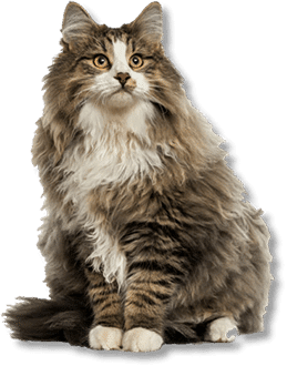 Pet grooming santa rosa hair of the dog when you want the best cat grooming santa rosa this place is the cats meow solutioingenieria Image collections