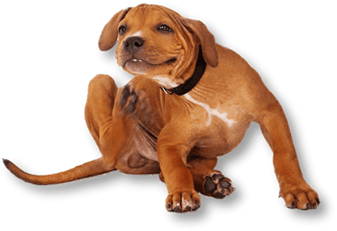 Pet grooming santa rosa hair of the dog does your pet need a flea treatment we can help solutioingenieria Image collections
